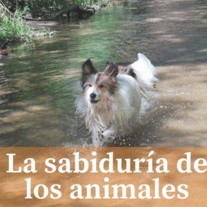 La sabiduría de los animales Parte 1